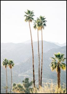Palm Trees I Poster