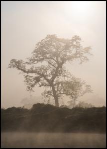Misty Tree Poster