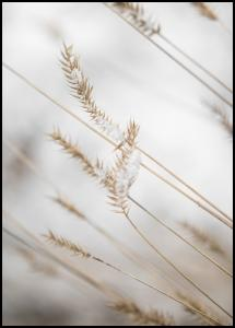 Swaying Reed I Poster